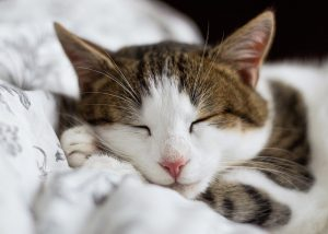 A photo of a sleeping cat.