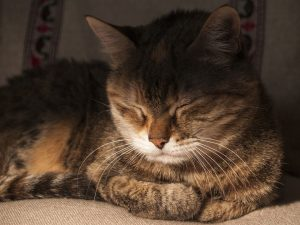 A photo of a cat this snoozing not sleeping