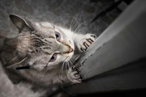 A photo of a cat sharpening its claws