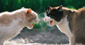A photo of cats fighting for territory.