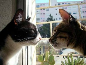 A photo of two cats staring at each other.