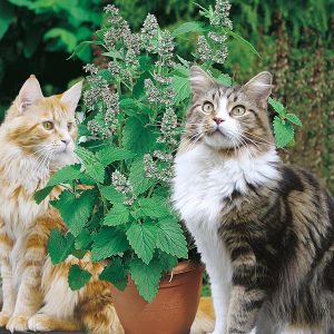 A photo of two cats with a catnip plant.