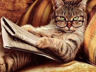 A funny photo of a cat staring