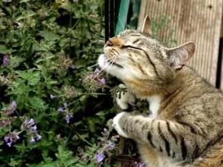 A cat running against a catnip plant.