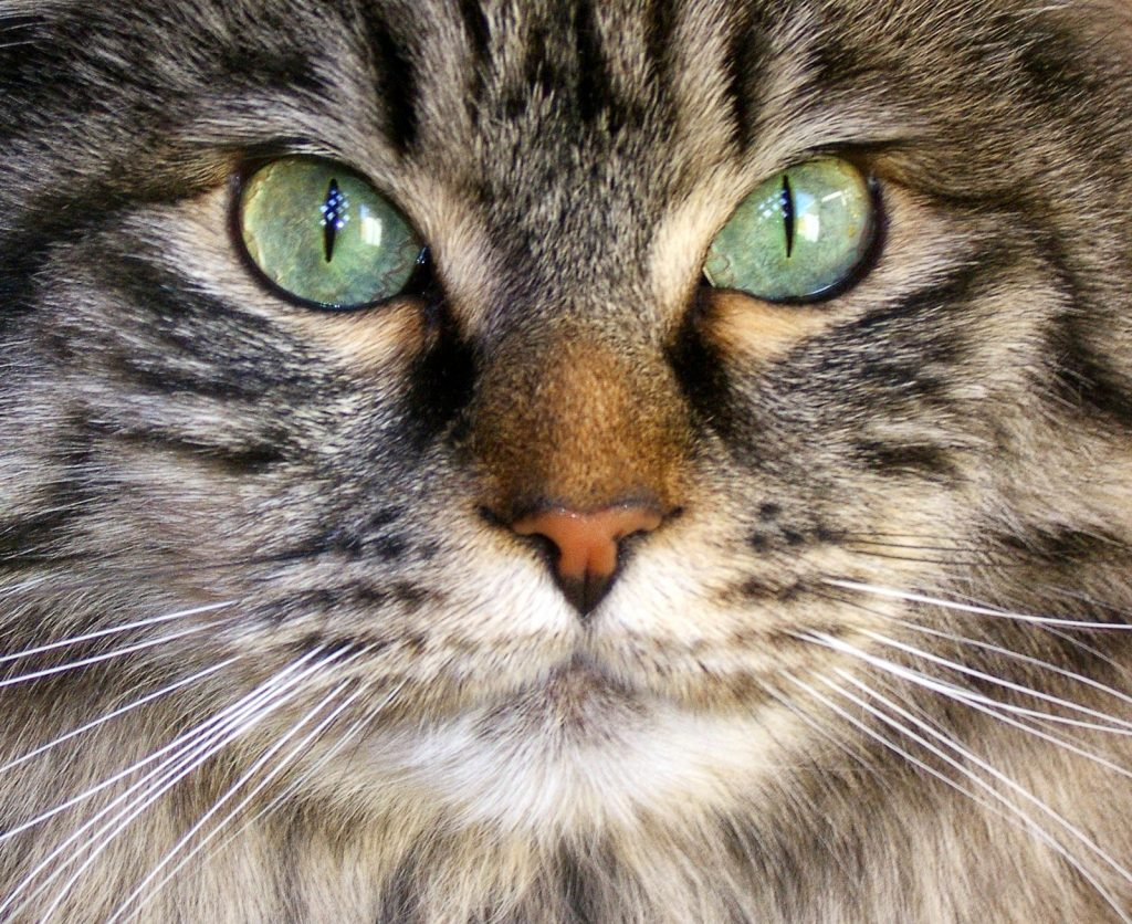 A photo of a cats eyes