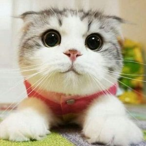 A photo of a cat looking cute