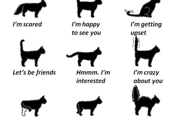 A photo of the different types of emotions a cat shows