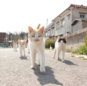 A photo of a gang of cats