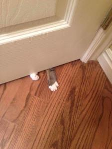 A photo of a cat trying to get in the bathroom
