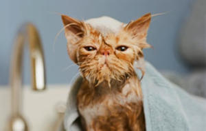 A photo of a cat in the bath