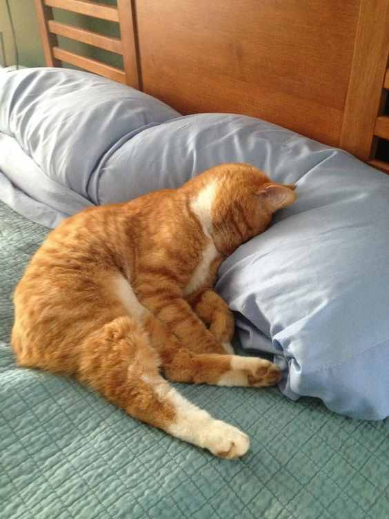 A photo of a cat sleeping on a pillow
