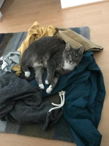 A photo of a cat sleeping on a pile of clothes