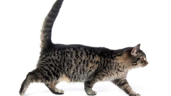 A photo of a cat and its tail