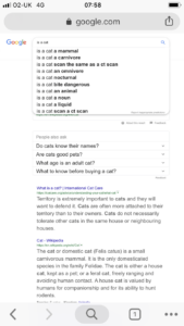 A screenshot of suggestions for cat questions