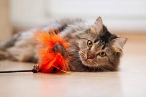 A photo of a cat playing with a toy
