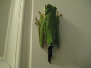 A photo of a frog pooping up a vertical door frame